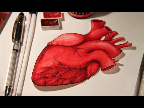 How to Make Human heart diagram (Easy way)