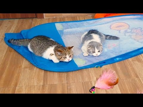 Cutest Cats, So Funny Cats Reaction to Playing Fishing Rod, Funny Cats Videos by Animals TV