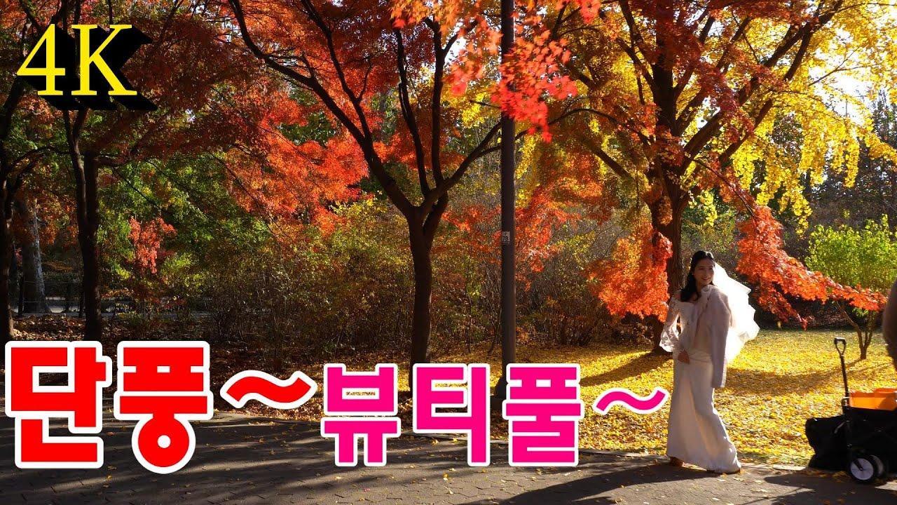 4K Maple autumn South Korea/단풍~ 초 고화질/가을 단풍/sony a6400
