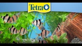 TETRA - urządzanie i pielęgnacja akwarium