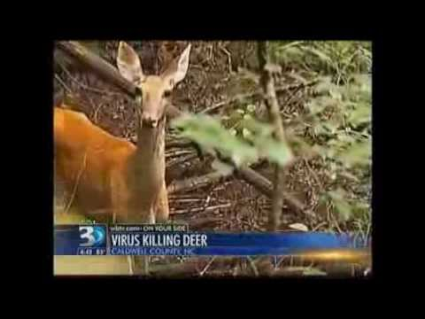 400 Deer found Dead in Caldwell County, North Carolina in just the last Week (Sept 9, 2012)