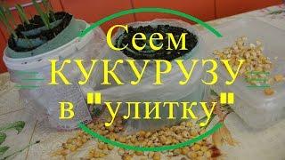 Сеем кукурузу в