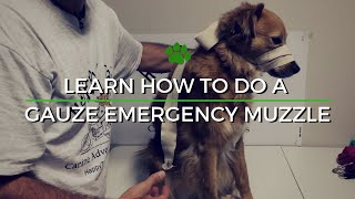Dog Travel Tips - How To Do A Gauze Emergency Muzzle
