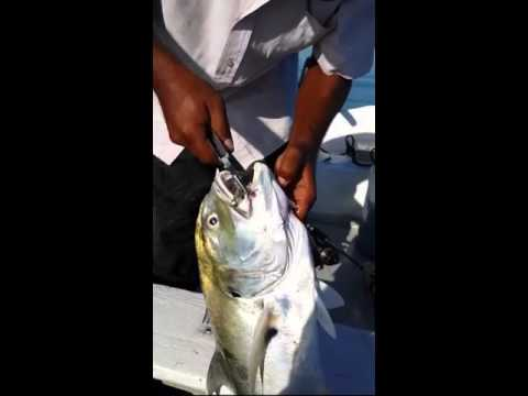 Fishing In Jamaica, Kingston Harbour