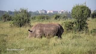 Game Drives at Nairobi National Park