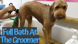 Full dog bath at the groomer