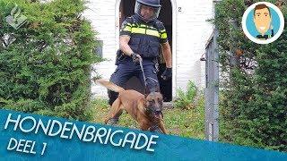 HONDENBRIGADE | SURVEILLANCEHONDEN | POLITIE | DEEL 1
