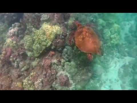 Vacation in Kihei, Maui, Hawaii with Green Sea Turtles