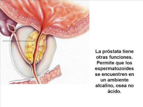 el liquido lubricante del hombre puede embarazar