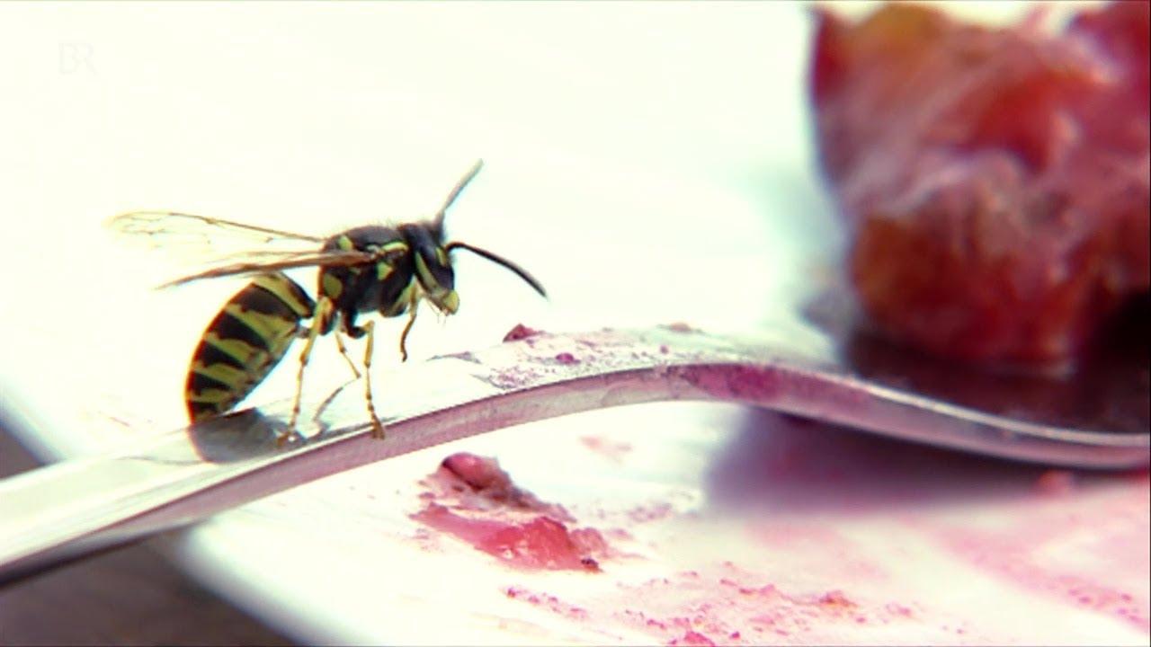 Mittel Gegen Bienen Und Wespen