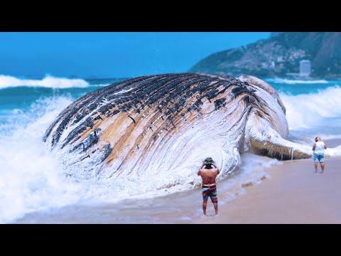 15 Biggest Sea