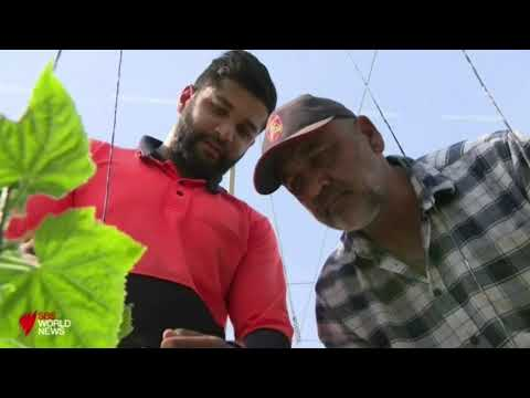 Australia's drought crisis: Sikh farmers fight to save their crops
