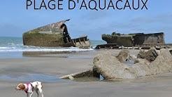 🐶 TOUTOU VADROUILLE : EN NORMANDIE ♥ 🐾 - #6 Plage d'Aquacaux (Octeville-sur-Mer 76) (PART II)