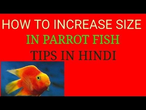 How To Increase Size In Parrot Fish,, Tips In Hindi