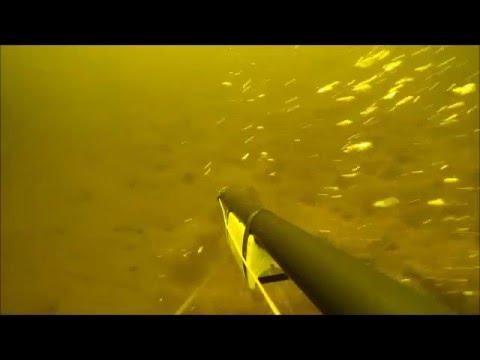 podvodnaya-ohota-na-sudaka-srednyaya-volga-video-pornuha-zrelih-zhenshin-za-pyatdesyat