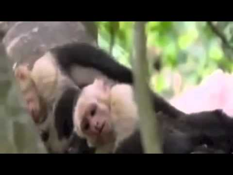 Funny Talking Animals in Fast Motion