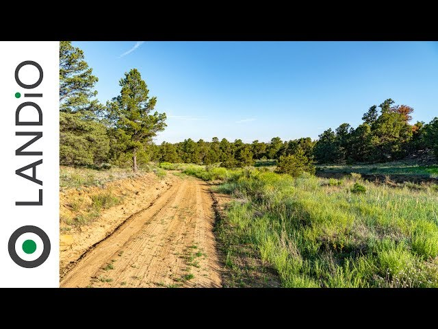 SOLD by LANDiO • Land in New Mexico • 4.56 Acre Wooded Homesite