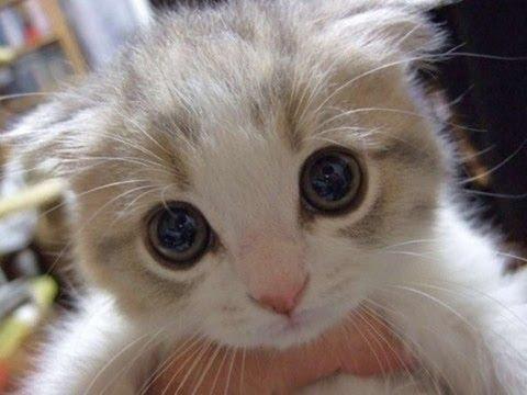 Няшные котики)) - YouTube