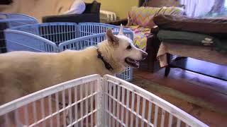 Senior Dog Gathering Room Cam 02-25-2018 14:41:46 - 15:41:47 thumbnail