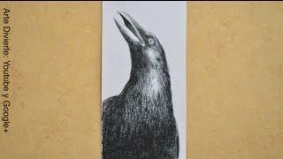 Dibujando aves:cómo dibujar un cuervo - Arte Divierte.