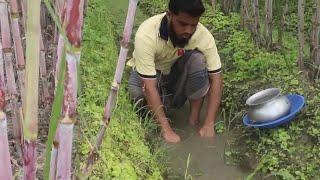 আখ ক্ষেত এ মাছ ধরা ৷৷  2018 best fish hunting video | latest fish traping bd