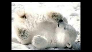 IJSBEER KNUT - Ice Ice Baby