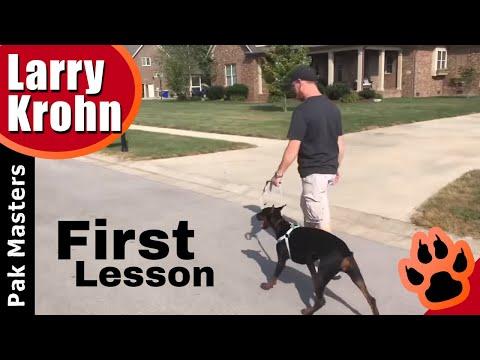 Doberman Pincher Puppy first lesson part 1