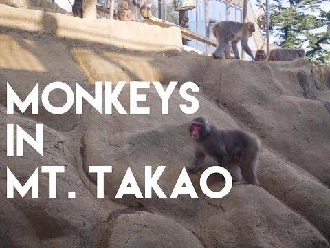 Monkeys in Mount Takao 9 ($10 day trip in Tokyo)