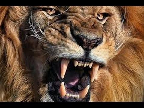 Animal Documentary National Geographic   APEX PREDATORS  Lion, Tiger, Cheetah, Hyena & More! HD 2016