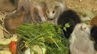 В каких условиях содержат животных на Садовой