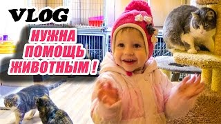 Влог: Спасаем животных! Едем в приют кошечек и собачек
