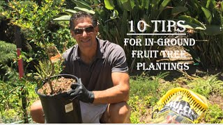 10 Tips For In-Ground Fruit Tree Plantings -- Wonderful Pomegranate