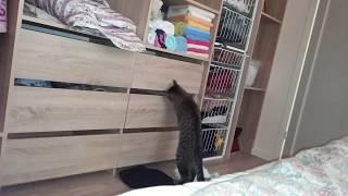 """Яшка - кот """"воришка"""" Пойман на месте преступления :)"""