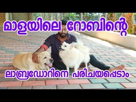 Naaya Valrthalumaayi robin mala [ECO OWN MEDIA] Malayalam 2018