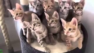 Улётное видео про животных 2014