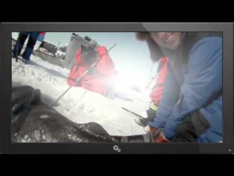 Dirty Jobs   418   Greenland Shark Quest