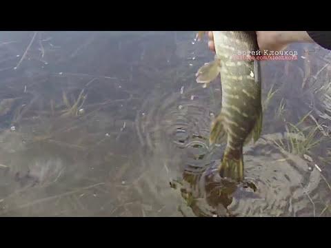 Рыбалка на спиннинг на лесном озере первая щука в апреле