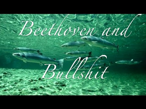 Beethoven and Bullshit- Margaree, Cape Breton