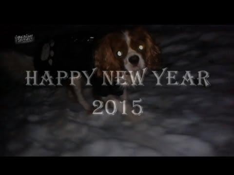 Cavalier King Charles Spaniel - 2015 Happy New Year - [Paca]