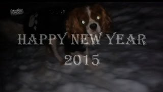 Cavalier King Charles Spaniel - 2015 Happy New Year - [paca]