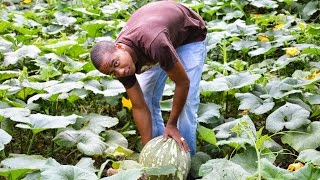Jamaica Volunteer Programs Agriculture Volunteer Abroad Programs