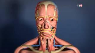 Восстановление поврежденных нервов лица. Доктор И...