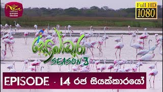 Sobadhara - Sri Lanka Wildlife Documentary | 2019-06-21 | Greater Flamingo Bird in Sri Lanka Thumbnail