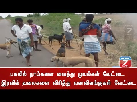 Illegal wild animal hunting at Ramanathapuram | News7 Tamil