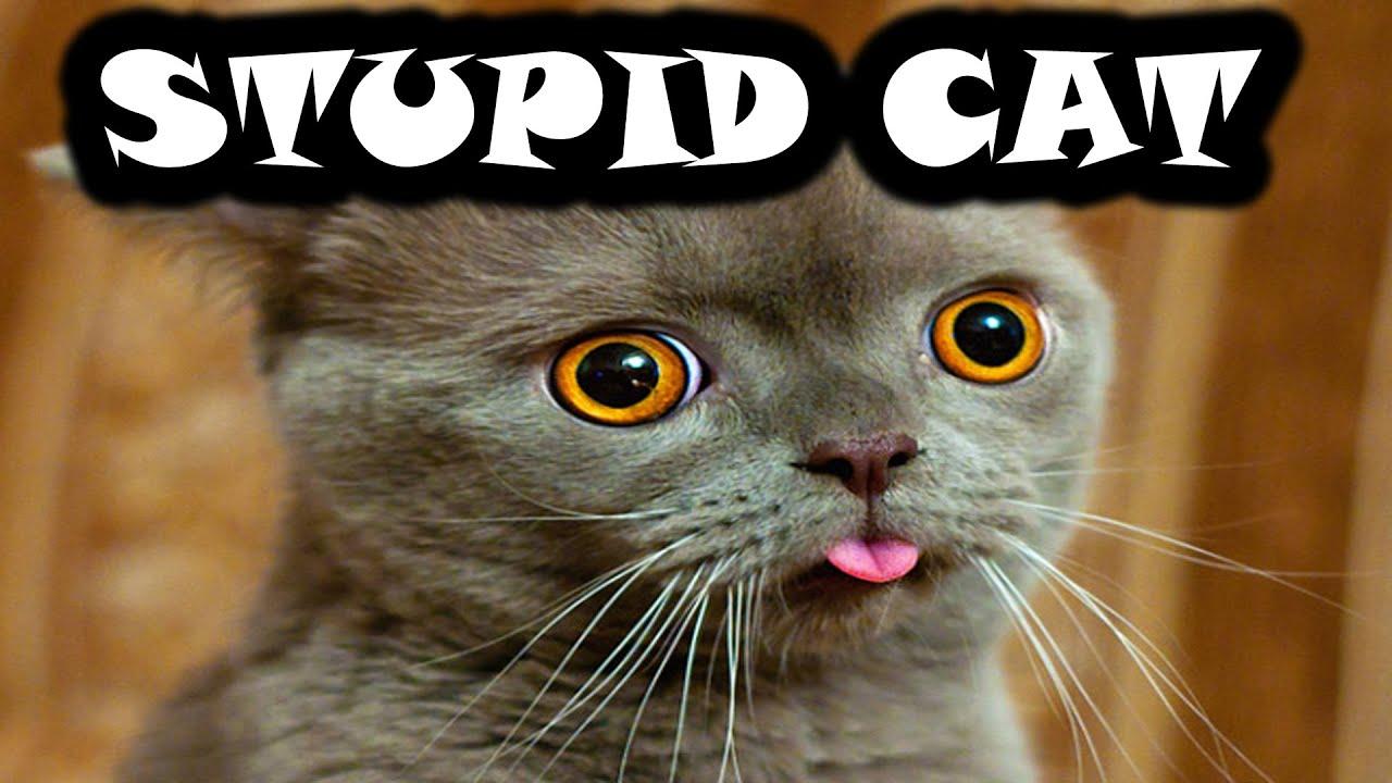 Stupid Cats Site Youtube Com