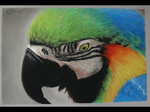 Dibujo Gis Pastel Guacamayo Azulamarillo Youtube
