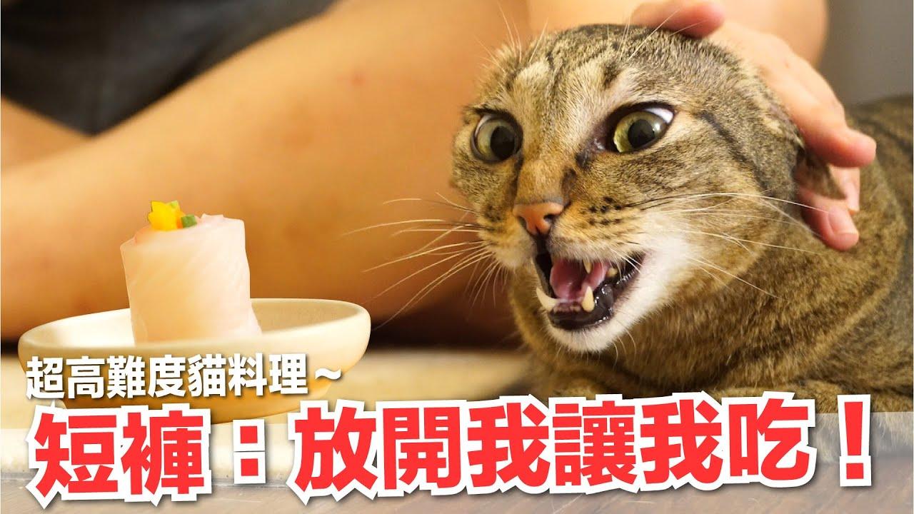 【好味小姐】短褲都激動了!超高難度貓料理!|貓副食|貓鮮食廚房EP194