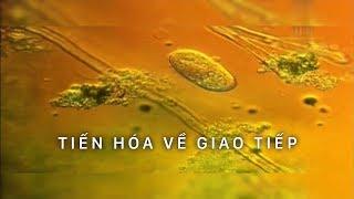 Câu chuyện tiến hóa : GIAO TIẾP | Phim tài liệu khoa học (Thuyết Minh)