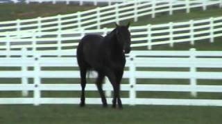 Repeat youtube video These Irons Are Hot-AQHA Stallion