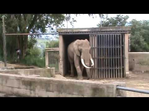 Paseo al Zoológico de Pereira 01